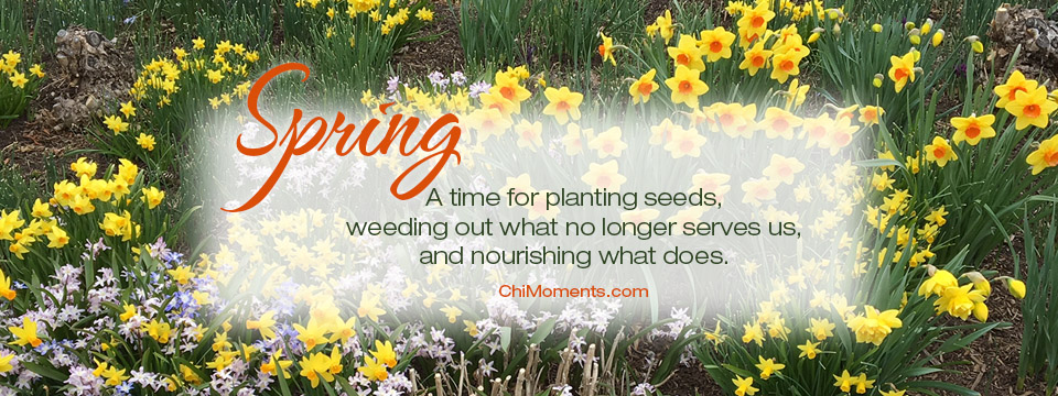 Spring … Planting Seeds on the Inside